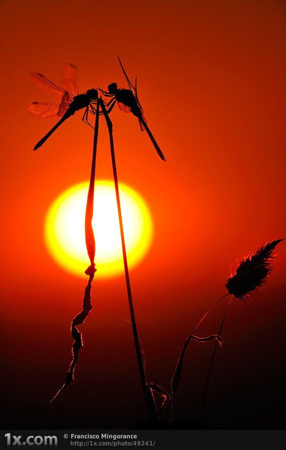 Los dragones del sol by Francisco Mingorance