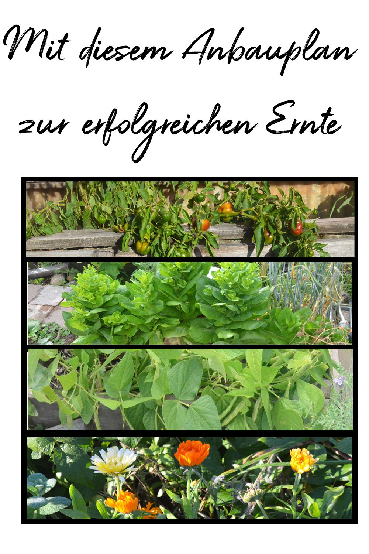 Gemusegarten Anbauplan So Gelingt Dir Gemuse Anbauen Haus Und Beet Pflanzplan Pflanzen Selbstversorger Garten