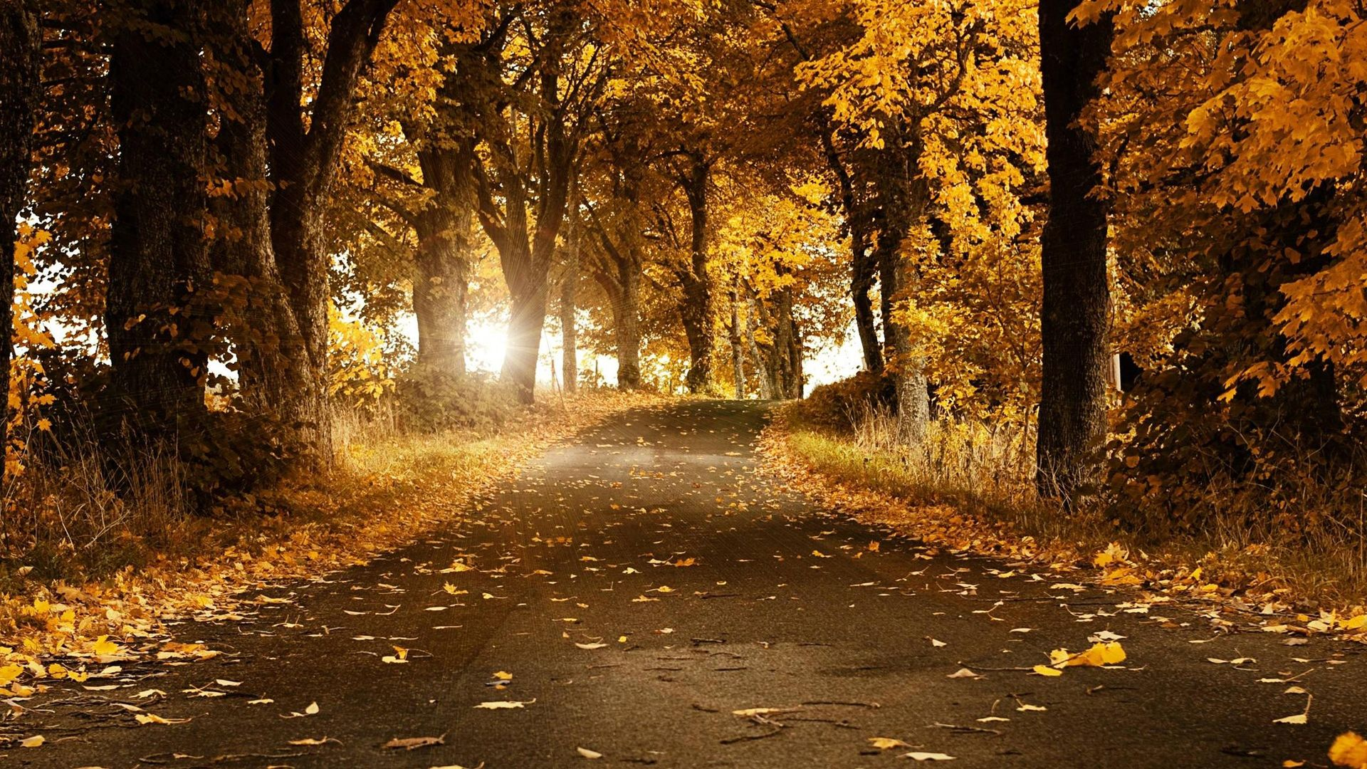 Download Wallpaper 1920x1080 Road Light Nature Full Hd 1080p Hd Autumn Scenes Beautiful Nature Beautiful Nature Wallpaper