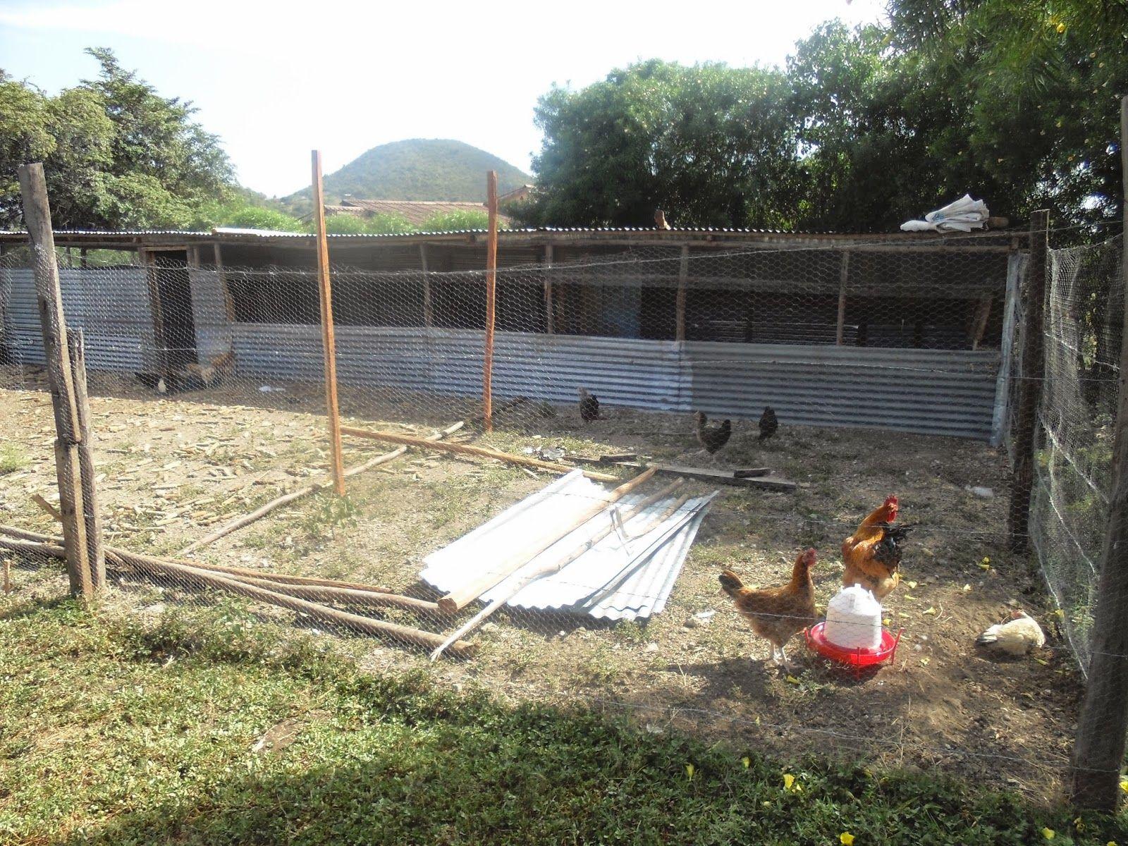 Simple illustration of kienyeji chicken house construction httpkienyejichicken blogspot