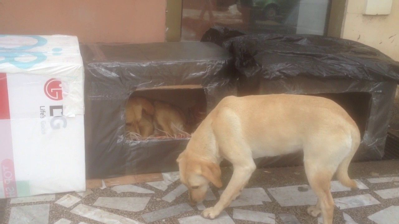 Homeless Dog In A Cardboard Box For Rescued From The Cold Street Dogs Homeless Dogs Animal Activism
