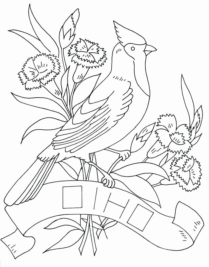 Pennsylvania State Bird Coloring Page Fresh Coloring Pages Ohio
