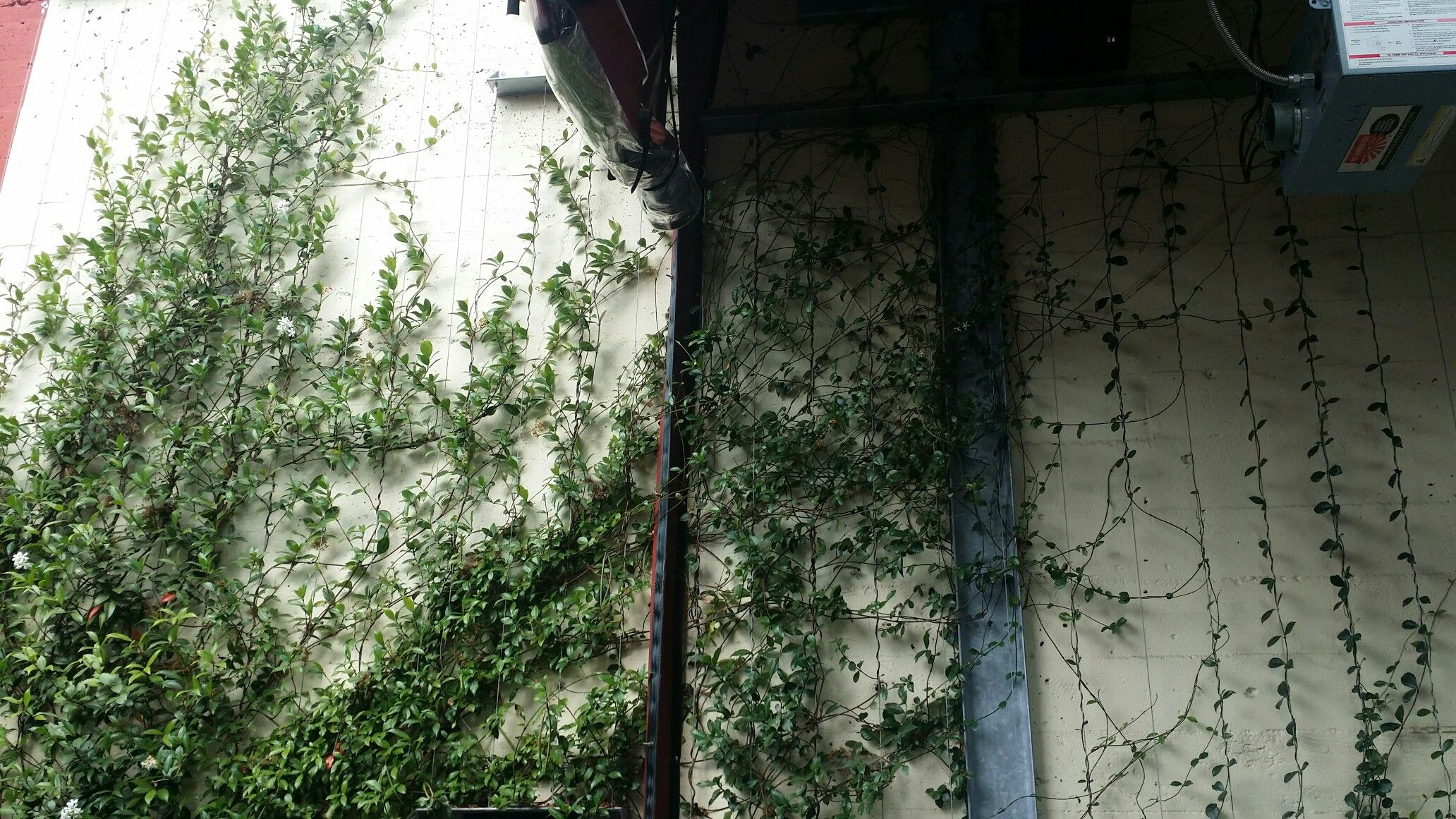 Stringer garden