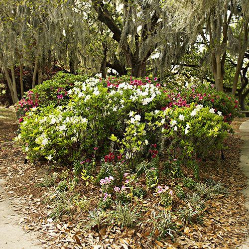 Hedges are several floral hedges with tall oak trees covered in spanish moss. Made of Matte Vinyl for a glare free finish.