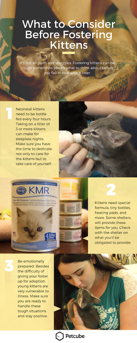 What To Consider Before Fostering Kittens Taking Care Of Kittens Newborn Kittens Kitten Care