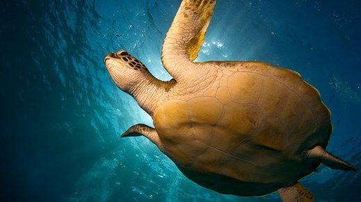 Sea turtle from below - Naama Bay, Egypt - Advanced Open Water Course - KILROY