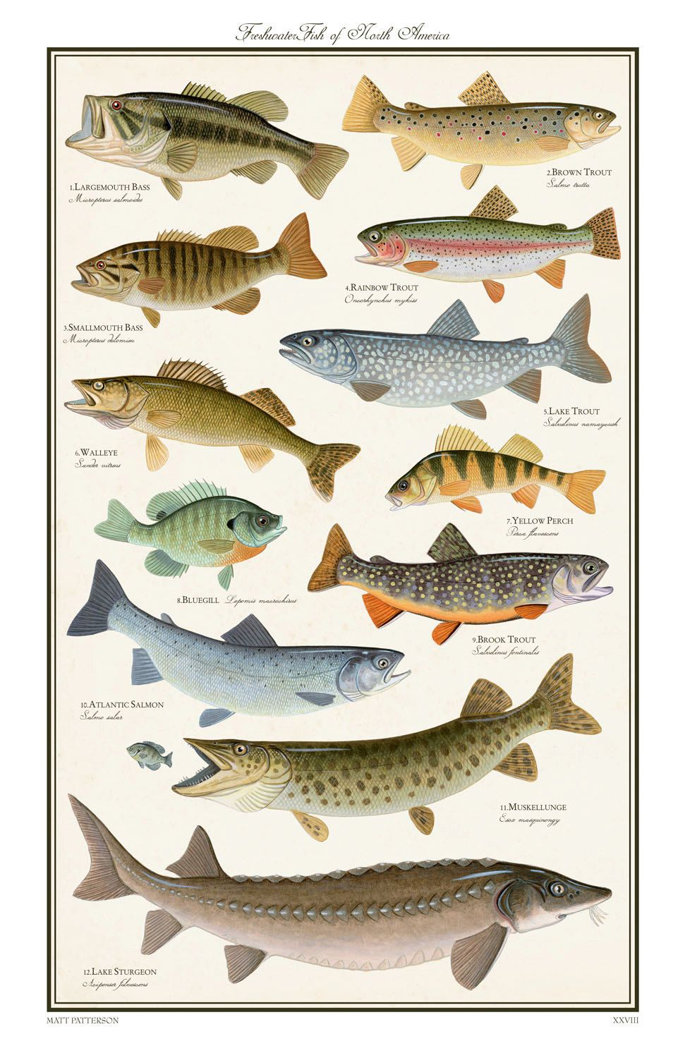 Freshwater fish of north america limited by for North american freshwater fish
