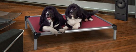 aluminum beds reviews kuranda puppy bed dog customer on
