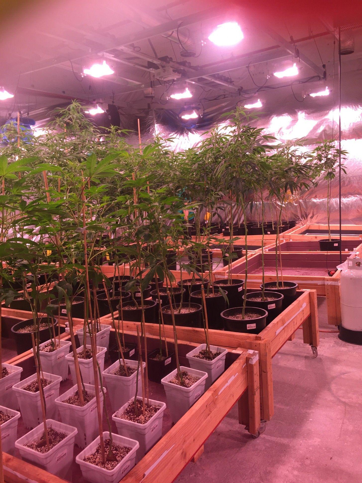 Four Cannabis Entrepreneurs Share Their Strangest Moments ...