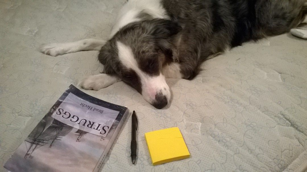Belle Hecht editing my book after a difficult day playing catch...