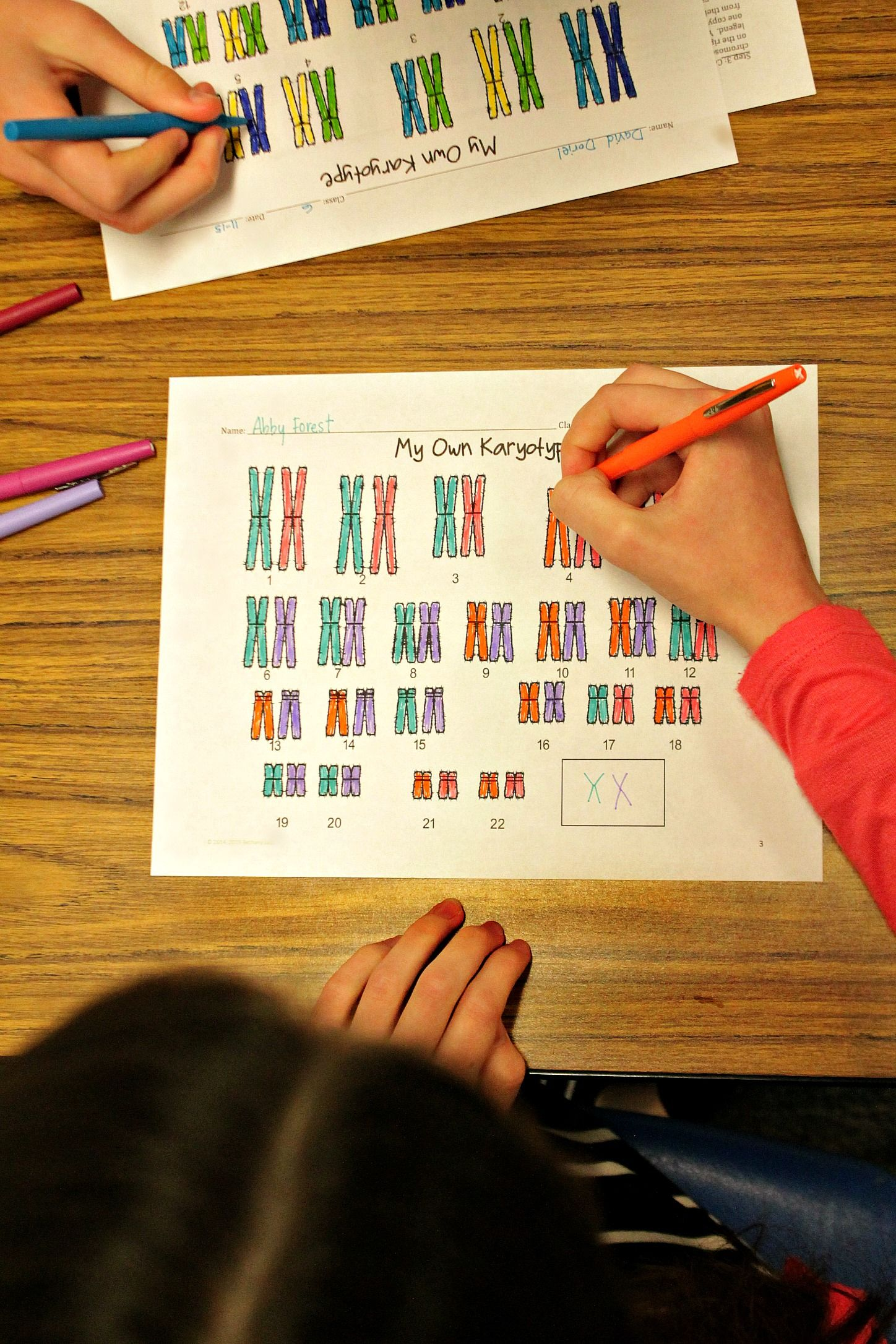 Create Your Own Karyotype Activity I Designed This To Really Help My Students Understa High School Biology Middle School Science Experiments Biology Resources