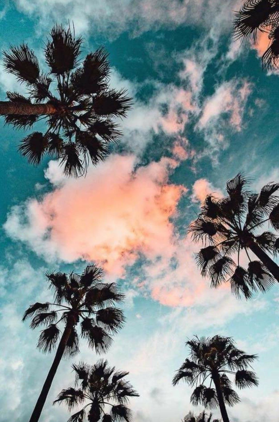 Palm Trees Phone Wallpaper Nature Photography Nature Wallpaper Aesthetic Wallpapers
