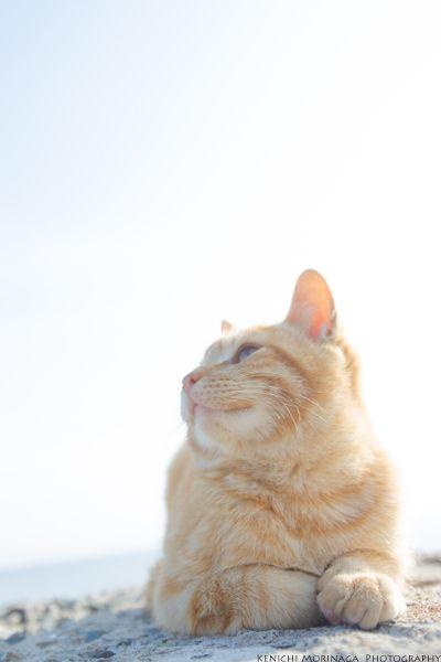 Cats Photographs ネコ写真 おしゃれまとめの人気アイデア Pinterest Jose Vitorino 子猫 猫 ねこ