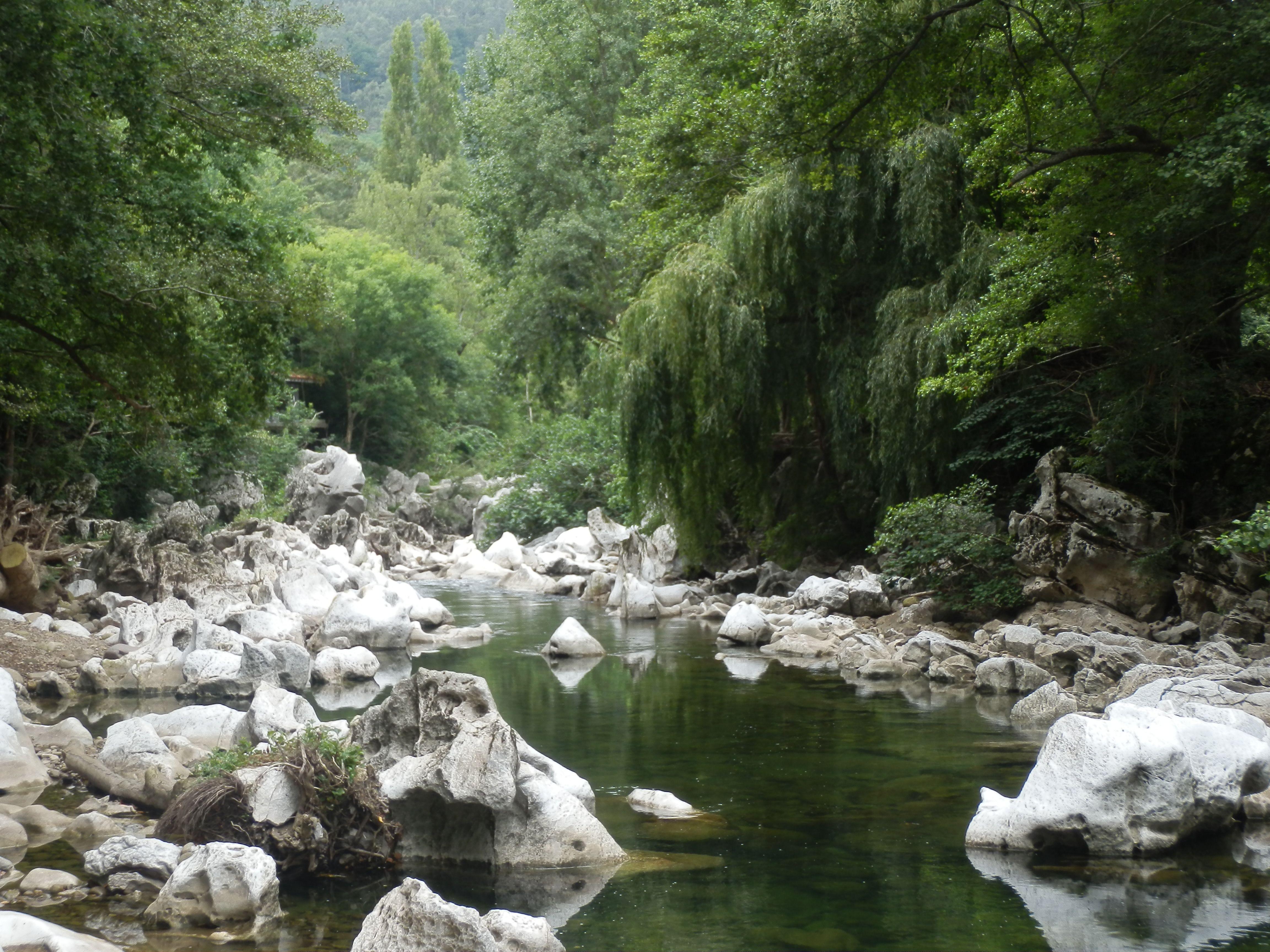 El contraste del bosque con la piedra tan blanca da una sensación fantasmagórica