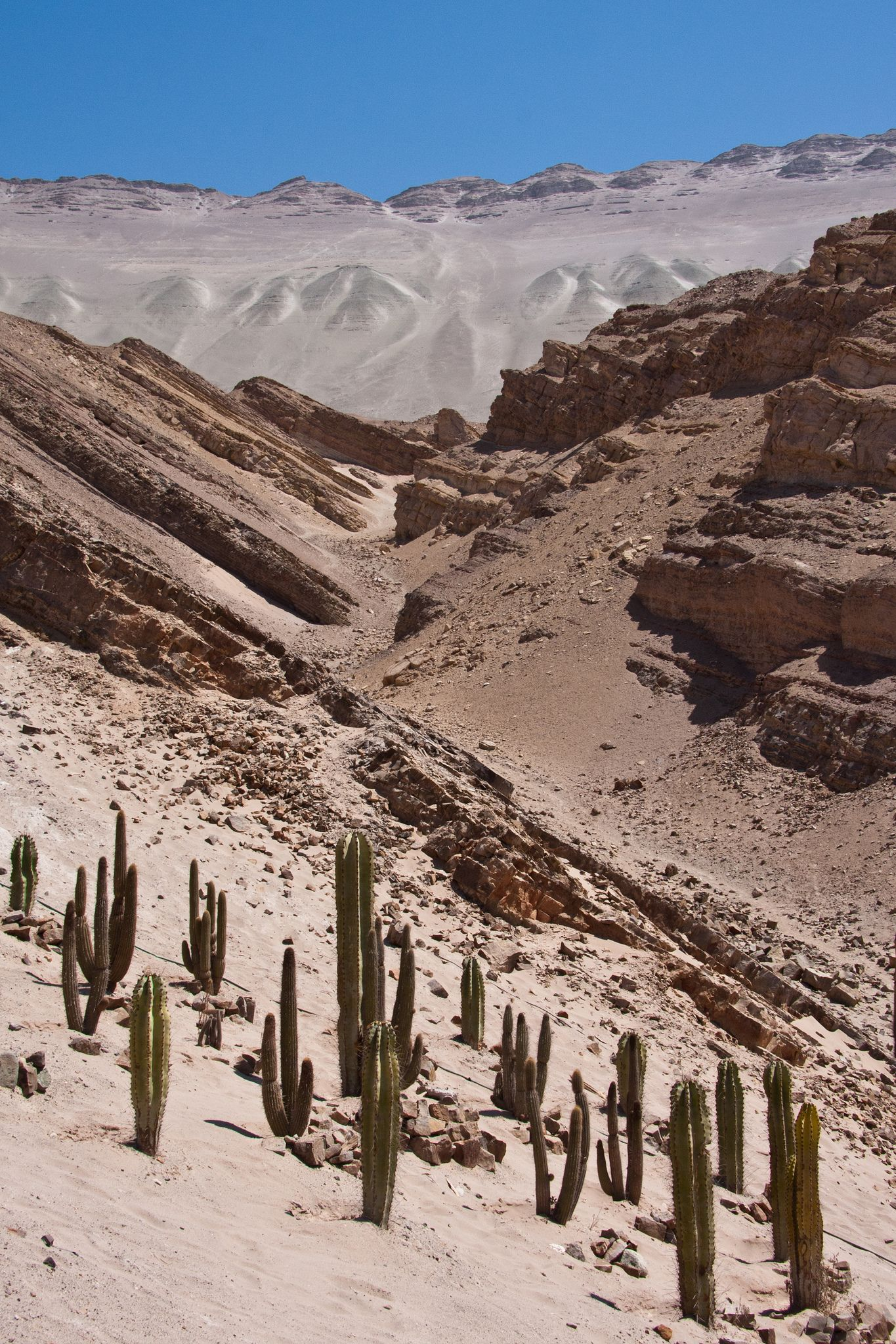 Parque Jurasico de Querulpa Perú