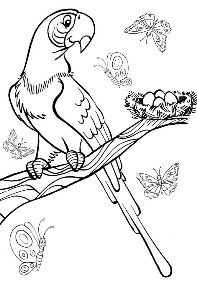 Desenho infantil para colorir de Arara Azul. Risco de pássaro para ...