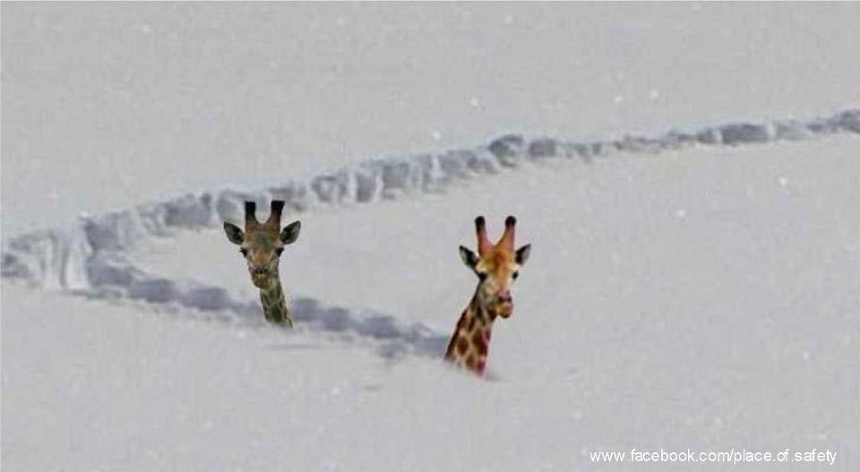 Living life to the max maxdog on kindle and snow - Lustige schneebilder ...