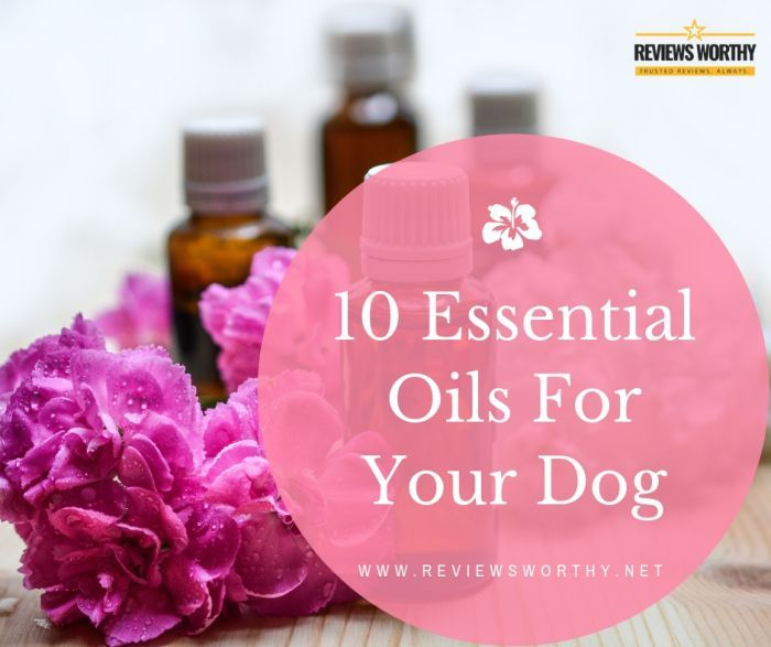 10 Essential Oils Which Can Benefit Your Dog & How To Use