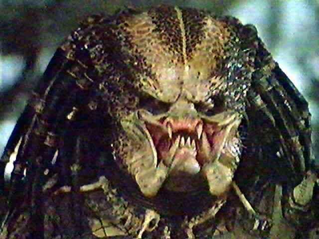 Image result for predator movie monster