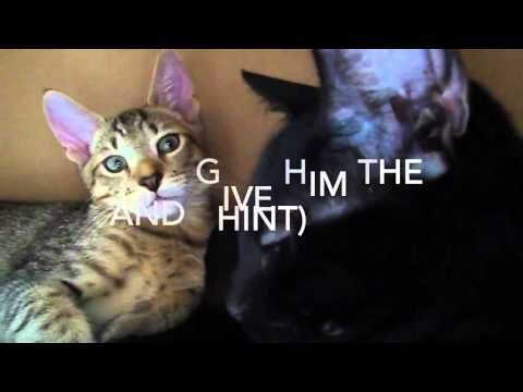 10 Steps to a Great Cute Kittens Valentines Date - http://www.kittensinlove.com/10-steps-to-a-great-cute-kittens-valentines-date/