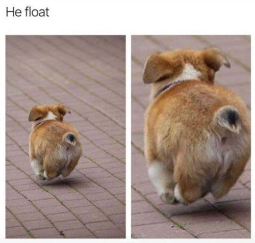Photo of Divertidos memes de animales del día – 30 fotos E10 – mundo de animales hermosos # dogmemeshi- # bi …