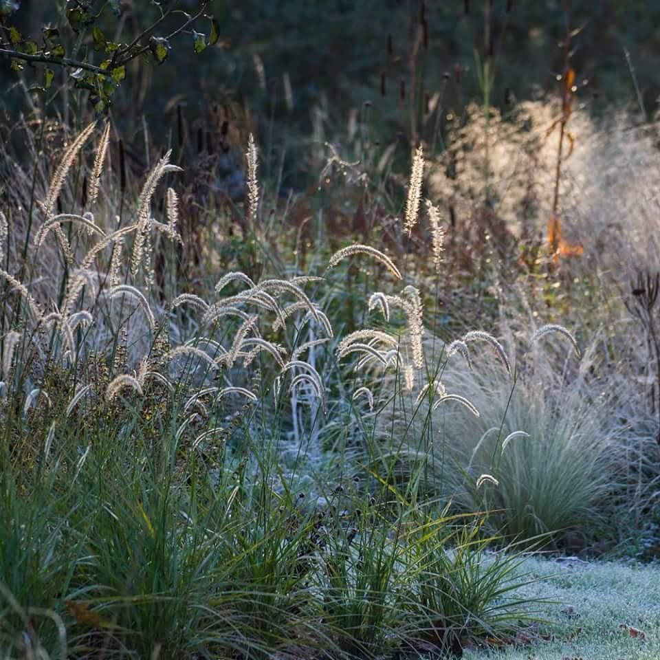 Jakobstuin on instagram garden for Pflanzengestaltung garten