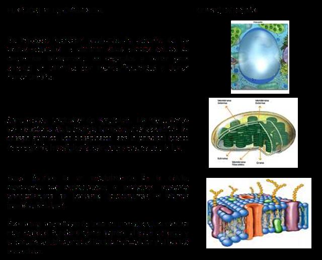 Ciencias Naturales Grado Sexto Funciones De Los Organelos