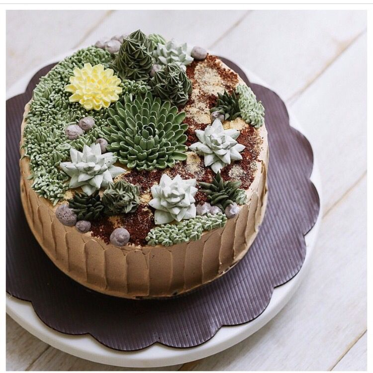 Succulent on a cake !! @ivenoven (cake decorating frosting ...