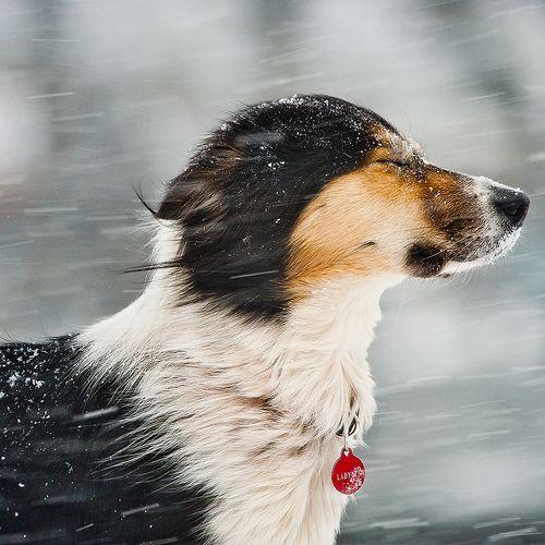Wind And Snow And Ladybug Dogs Animals Beautiful Dog Life