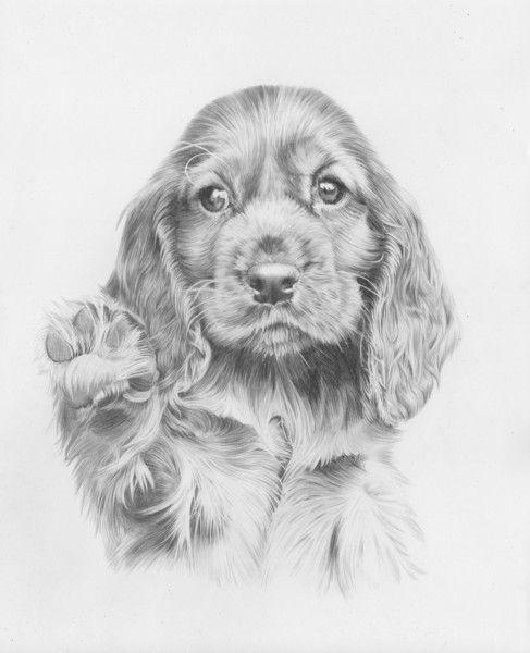 Springer Spaniel Puppy Canine Art Dog Art Puppy Art