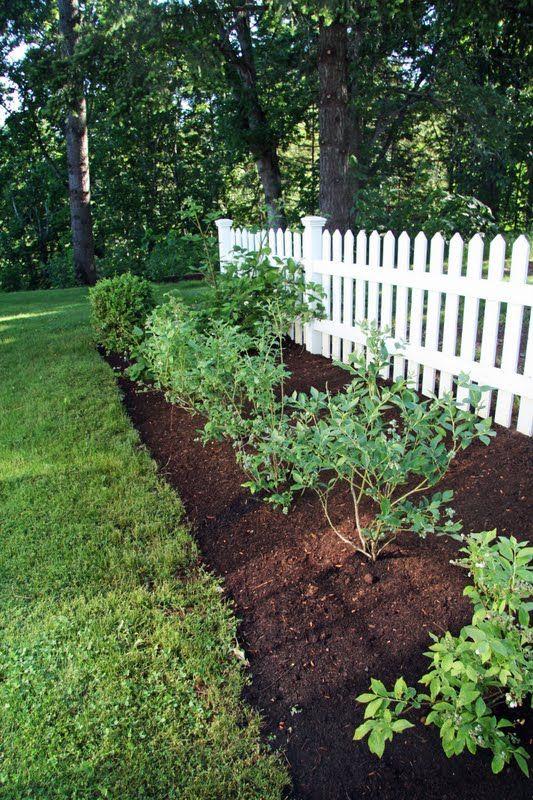 A Country Farmhouse Our Berry Garden Berry Garden Beautiful
