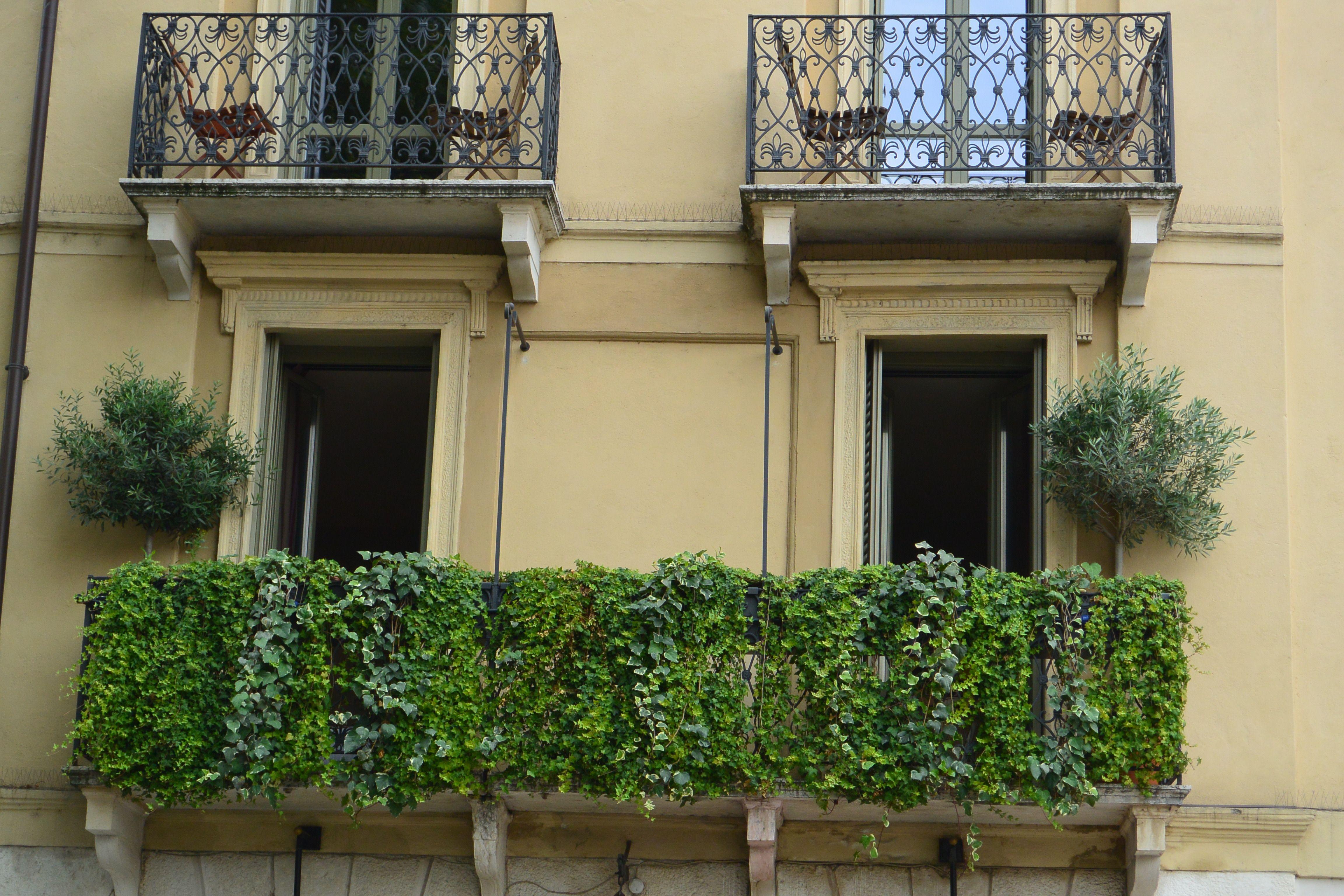 Sichtschutz Auf Dem Balkon Mit Efeu Balkon Pflanzen