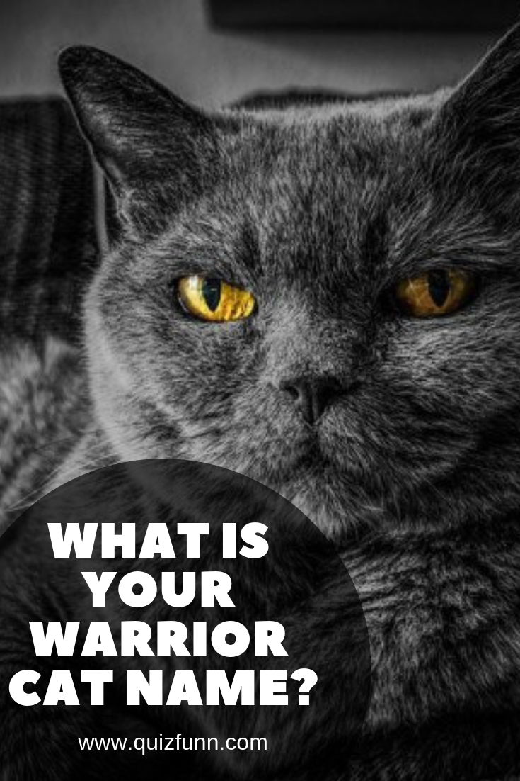 What is your warrior cat name? Warrior cat names