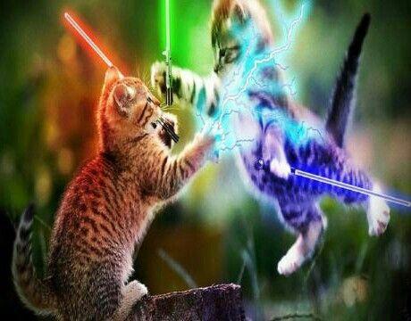 KittyWars