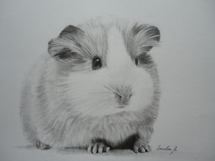 Epingle Sur Realistic Animal Pencil Drawings