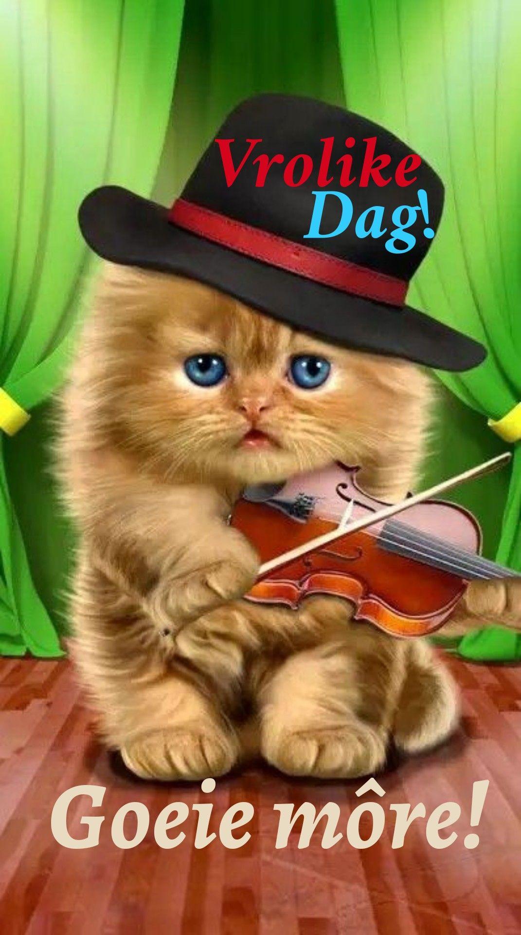 Pin van Lizette Pretorius op Goeie môre Schattige katten