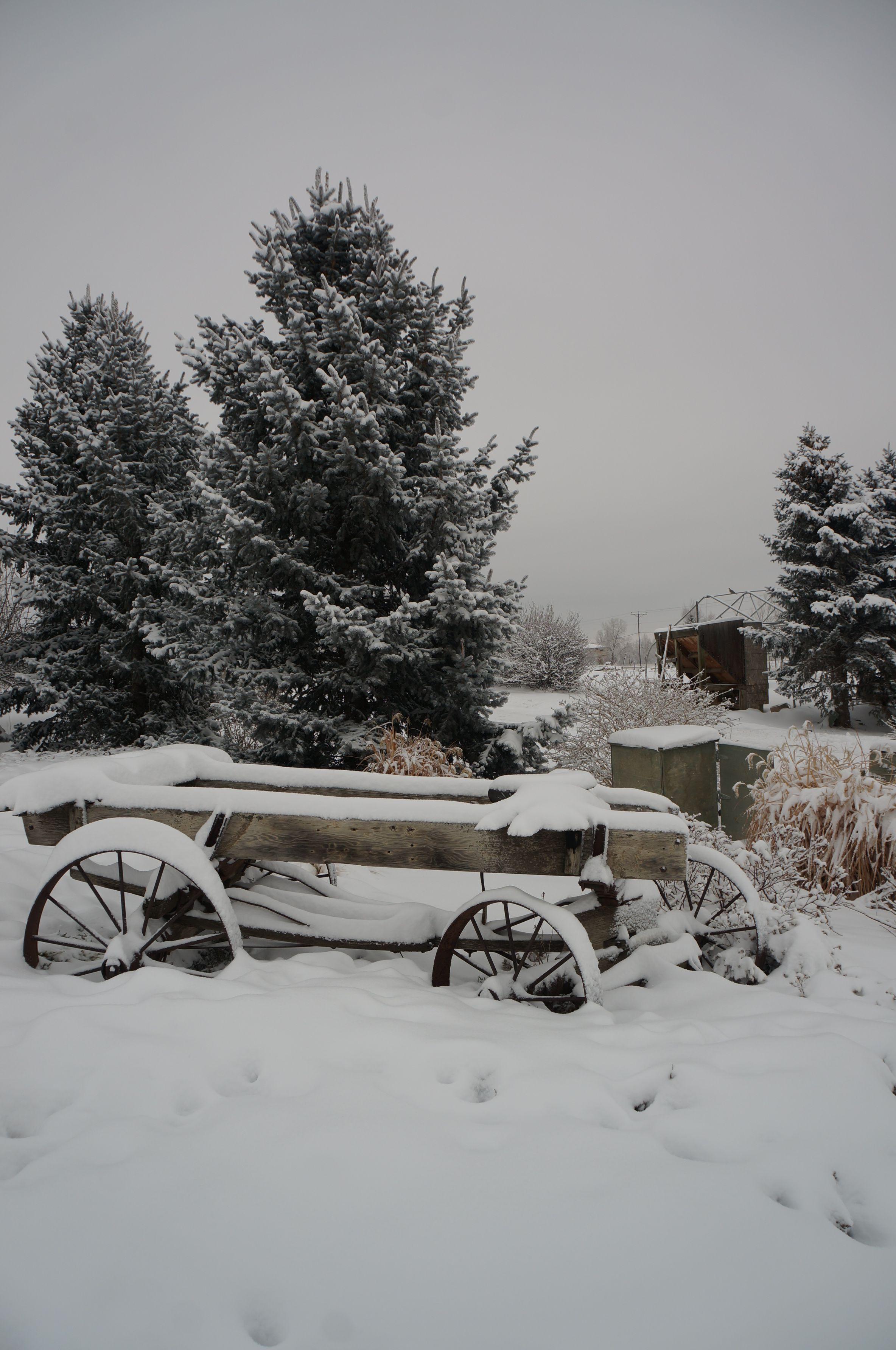 winter landscape gardening landscape landscape design by alpine