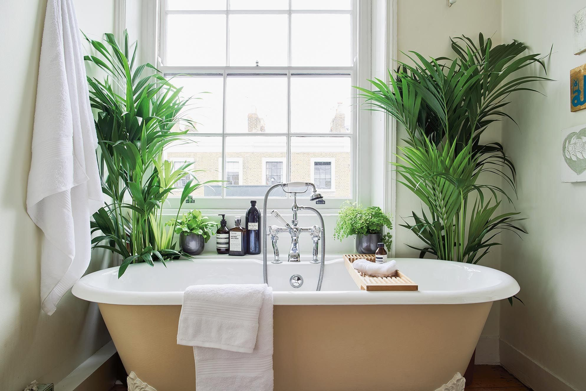 Feng Shui Room App Apartment Plants Plants Bathroom Plants