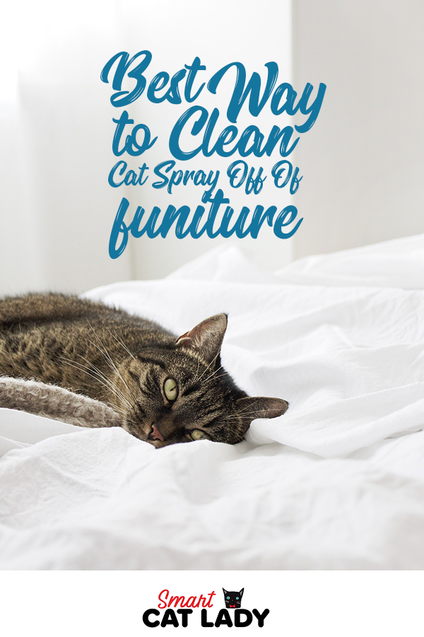 The Best Way To Clean Cat Spray Off Of Your Furniture