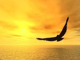 Resultado De Imagen Para Paisajes Con Aguilas Volando Aguilas