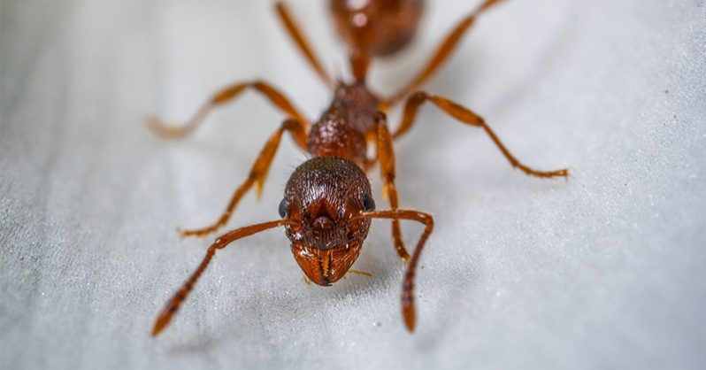 This Natural Diy Poison Will Clear Your Home Of Ants Best Pest Control Get Rid Of Ants Pest Control