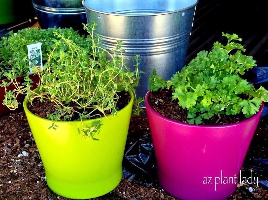 How To Grow Herbs Indoors Herbs Howto Plant Indoorgarden Garden Diy Azplantlady Growing Herbs Outdoors Herbs Indoors Herb Growing Kits