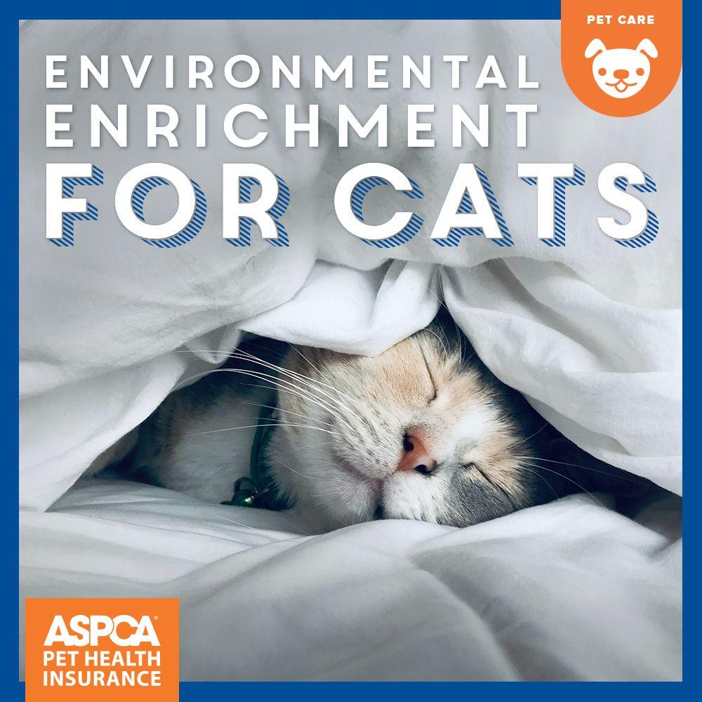 Environmental Enrichment For Cats Aspca Pet Health Insurance Cats Pets Cat Day