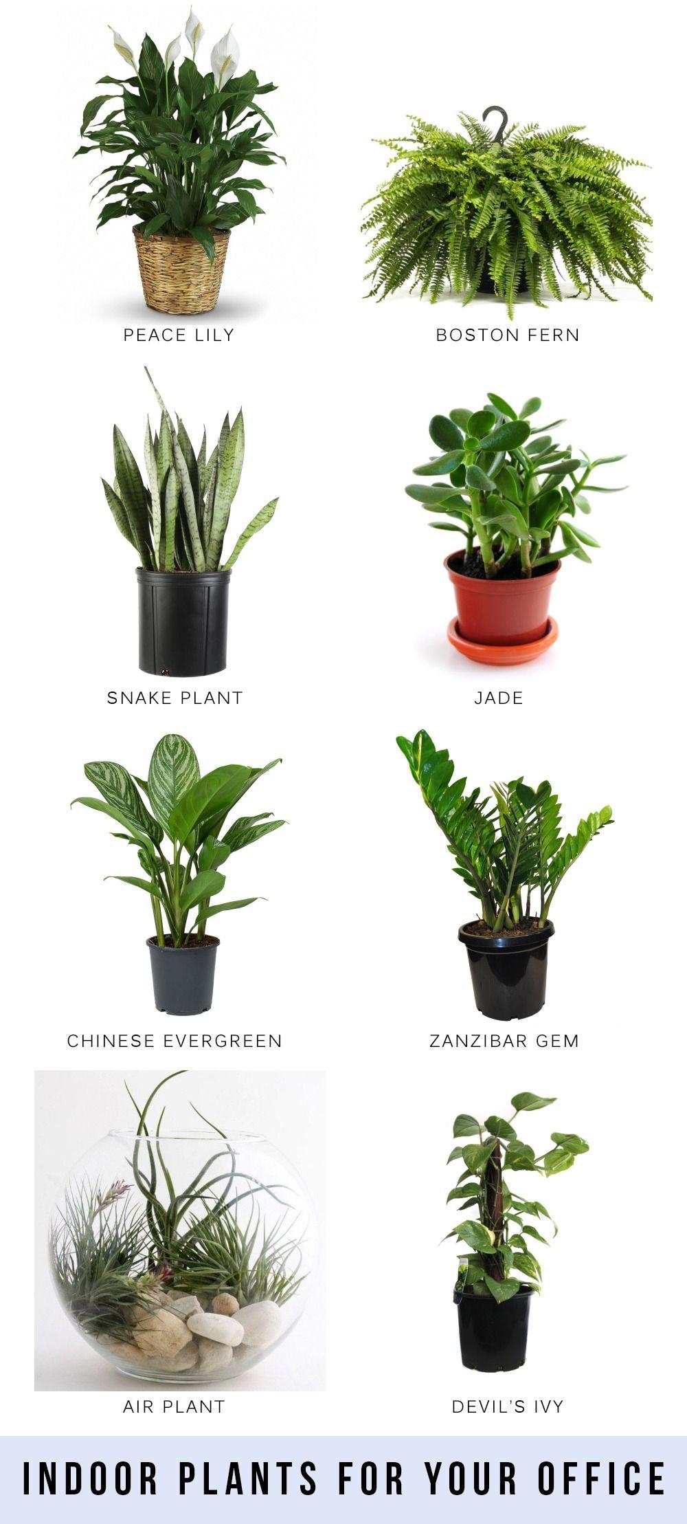 6 Indoor Plants That Would Love To Live In Your Bathroom Indoor