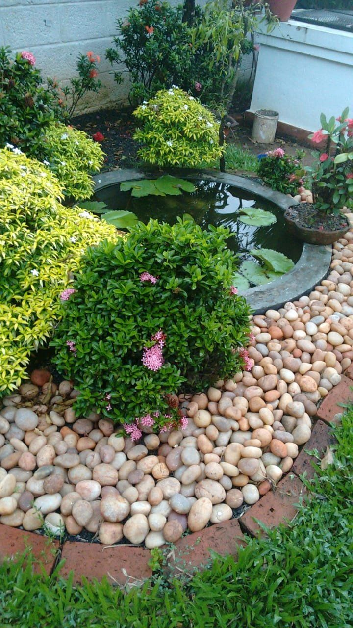 Simple Garden Fish Pond with water plants - make your own ...