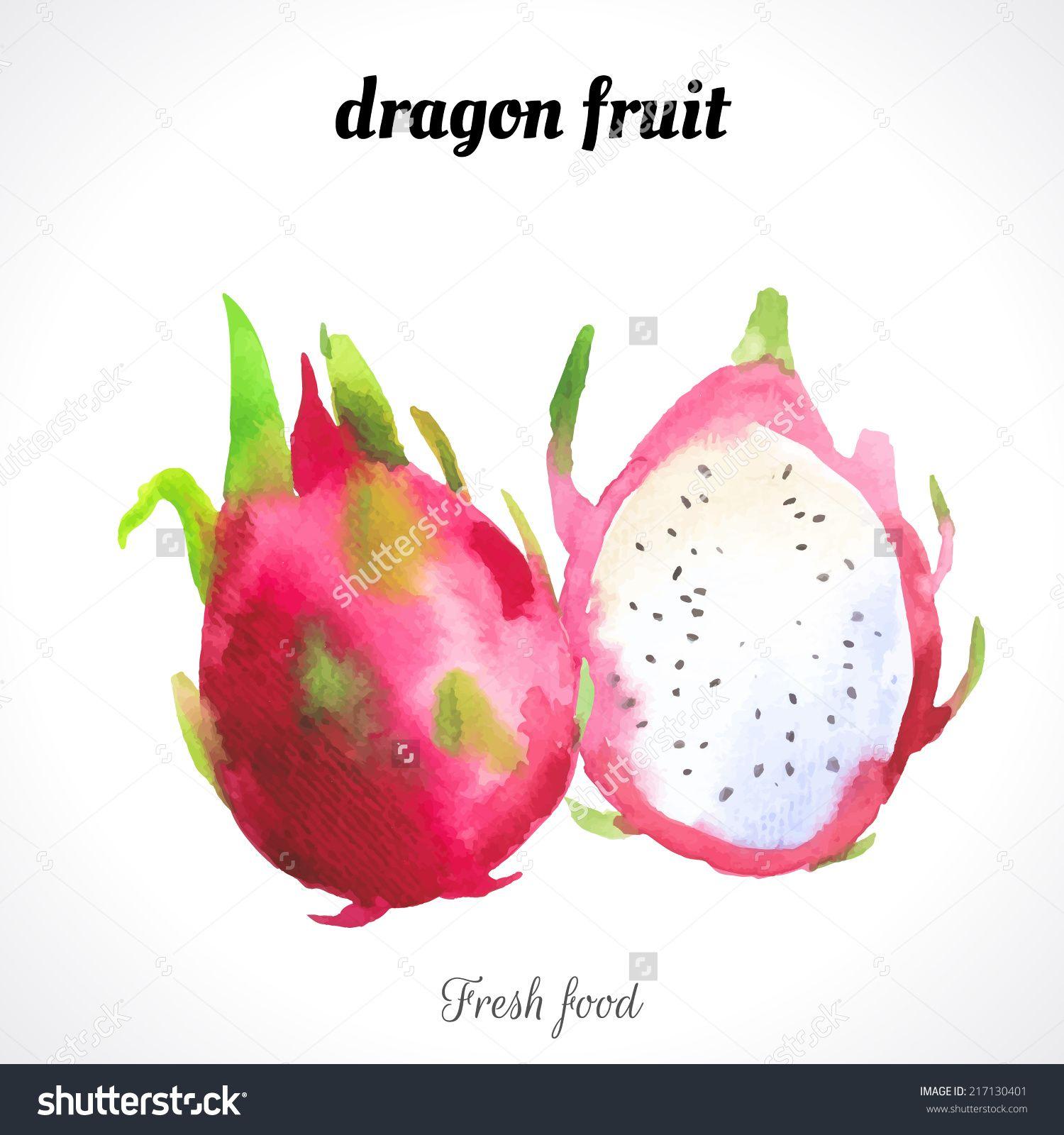 Watercolor Dragon Fruit Provencal Style Recent Watercolor