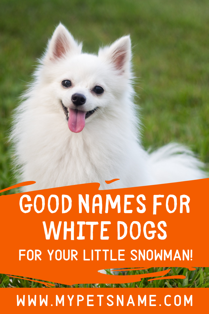 Good Names For White Dogs White Dogs Cool Names Dog Names