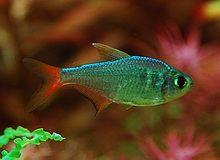 Bubbles Aquarium Fish Fish Aquarium Fish Tetra Fish