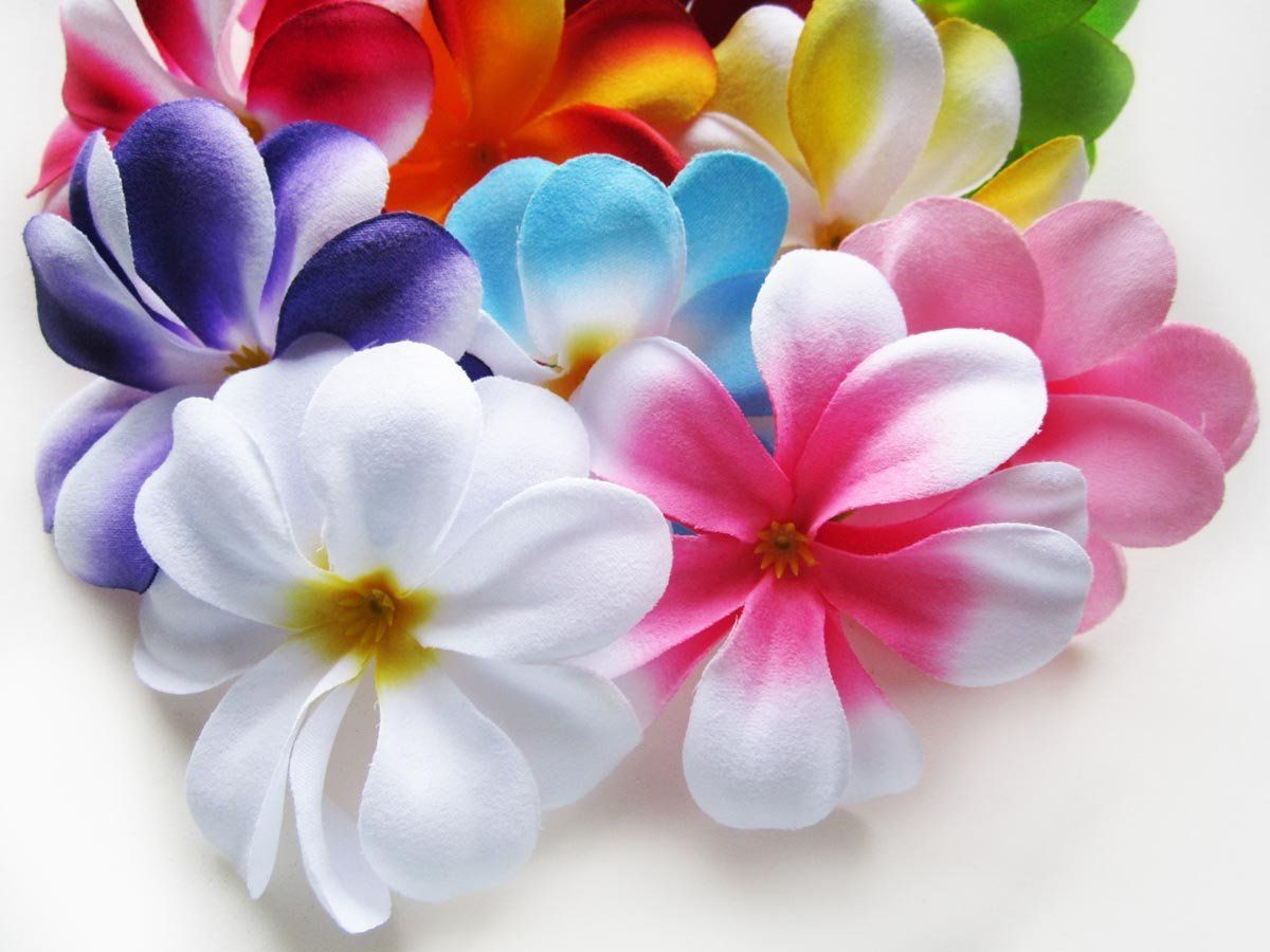 100) Assorted Hawaiian Plumeria Frangipani Silk Flower Heads - 3 ...