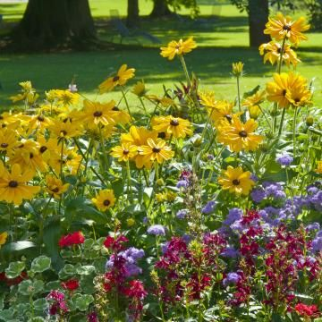 Photo of The best continuous flowerers for endlessly beautiful herbaceous beds